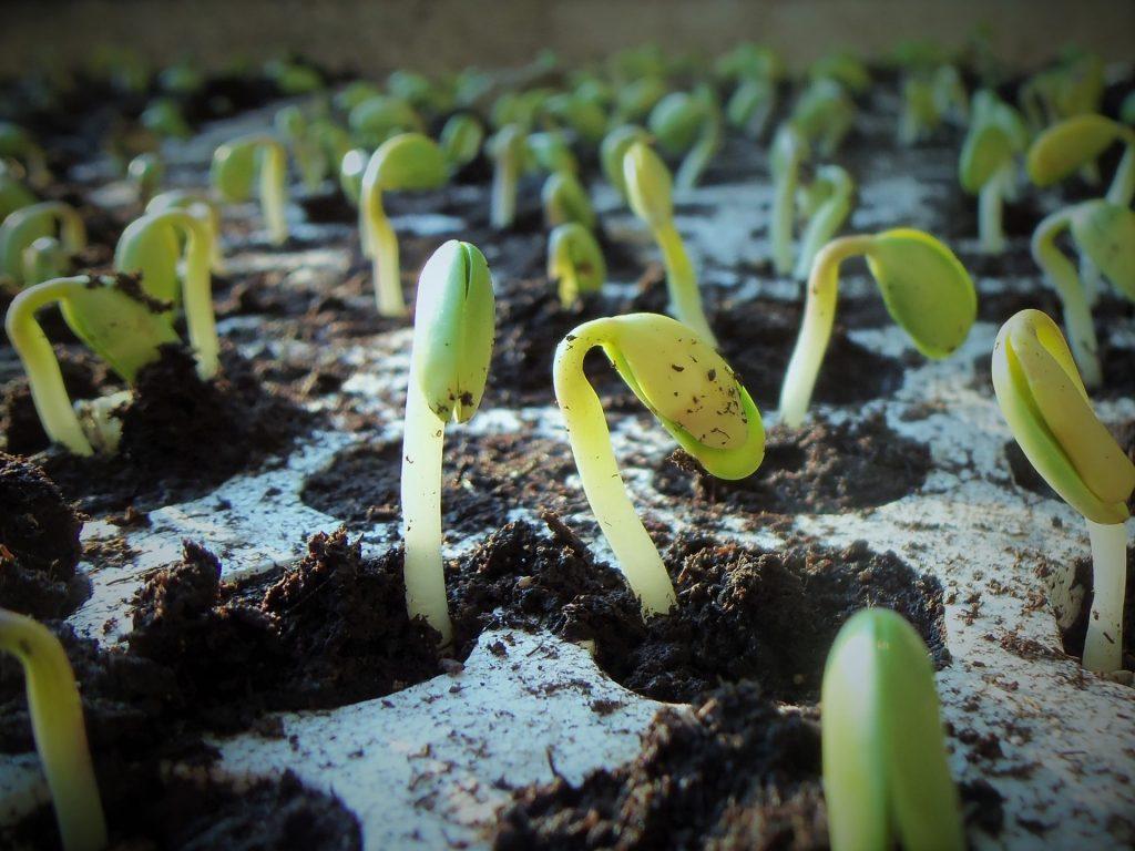 germination life