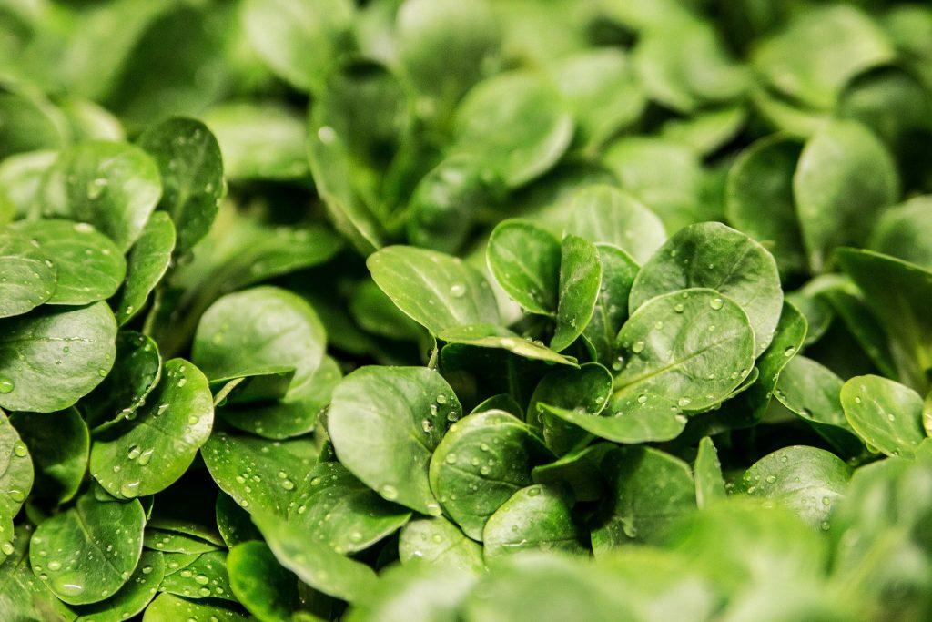 green vegetable vitamin vegan