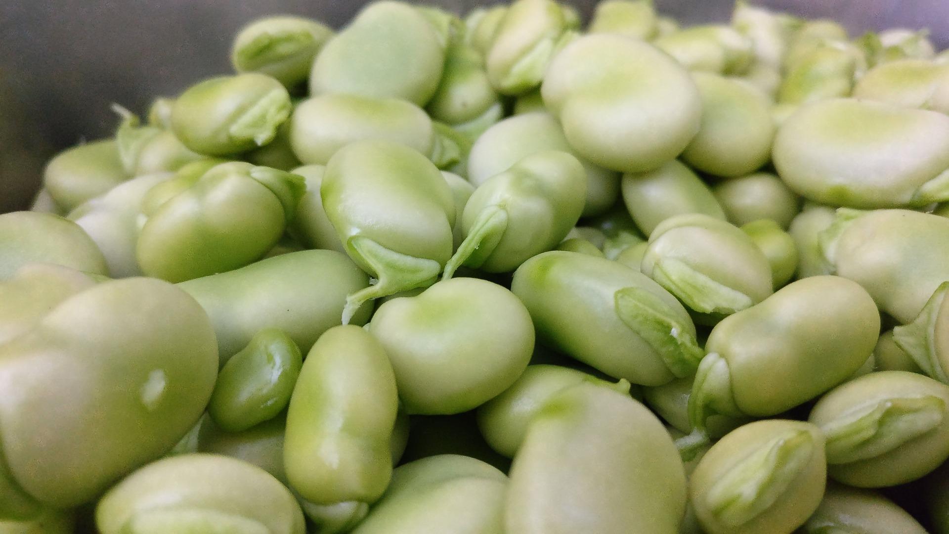vegetable-3365678_1920